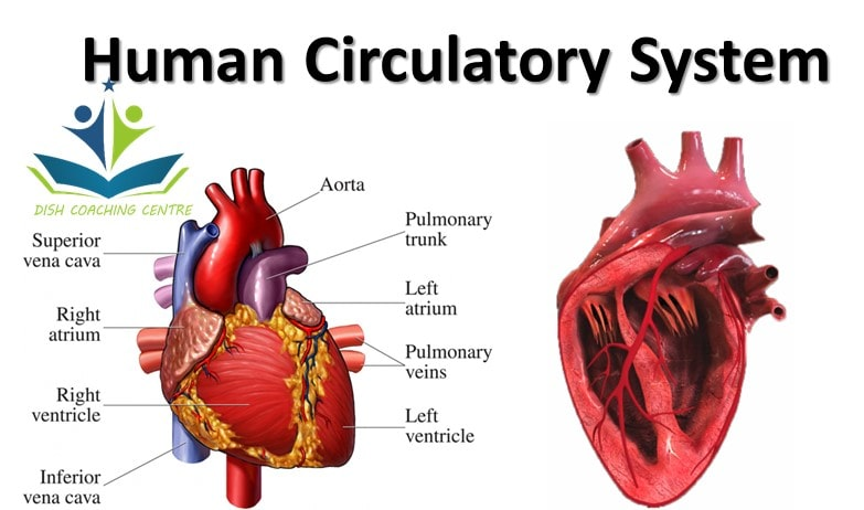 what are components of blood | what are functions of blood | what are the functions of lymph | blood pressure | blood