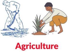 SSP Full Form In Agriculture